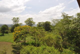 Surrounding View of the One Bedroom House for Sale in Usa River by Tanganyika Estate Agents