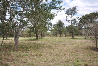 The View of the Land for Sale in Usa River, Arusha by Tanaganyika Estate Agents