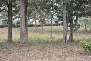 The Grounds of the 3 Bedroom House for Sale in Arusha by Tanganyika Estate Agents