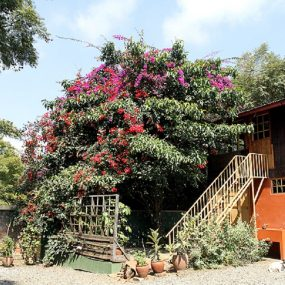 Outdoor Staircase of the 5 Bedroom House for Sale in Sakina, Arusha by Tanganyika Estate Agents