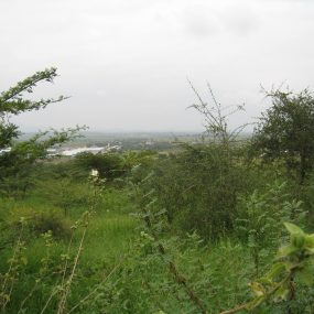 Some of the 9 Acres for Sale in Mateves, Arusha by Tanganyika Estate Agents