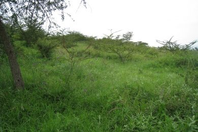 Nine Acres for Sale in Mateves, Arusha