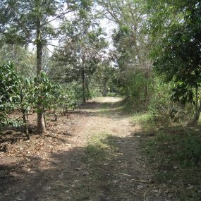 Some of Views of the 3 Acre Plot for Sale in Usa River, Arusha by Tanganyika Estate Agents