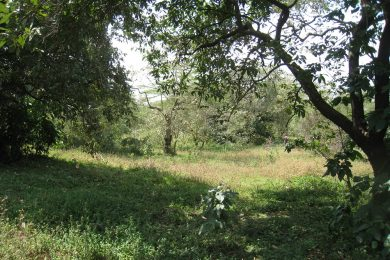 Three Acre Plot for Sale in Usa River, Arusha