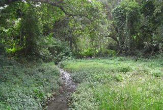The Land for Sale on an Ex Coffee Estate, Arusha by Tanganyika Estate Agents