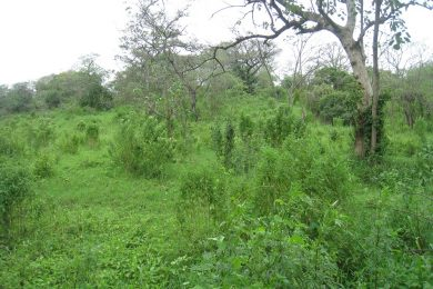 Plot of Land for Sale in Usa River, Arusha
