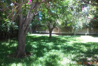 The garden of the Standalone House for rent in Masaki by Tanganyika Estate Agents