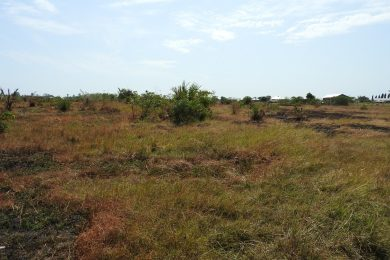 Outskirts of Tanga – 5.5 acres