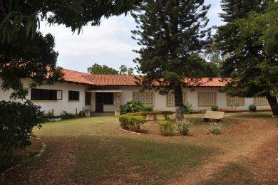 Raskazone – Tanga – Mature garden