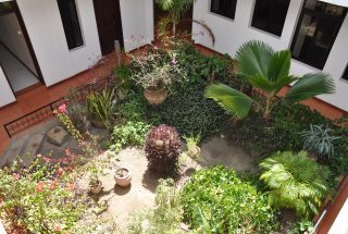 Mature Garden of Standalone House for Rent in Oysterbay by Tanagayika Estate Agents