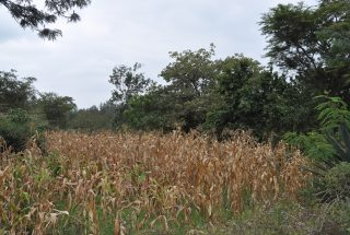 The View of the Eight Acres of Land for Sale in Usa River, Arusha by Tanaganyika Estate Agents