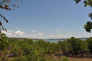 The Cliff & Vegetation of the Oceanfront Land For Sale in Kikokwe by Tanganyika Estate Agents