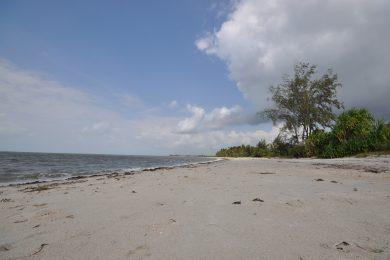 Mkwaja – Saadani – Beach paradise