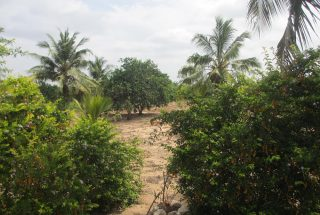 The Farm for Sale in Pongwe, Tanga by Tanganyika Estate Agents