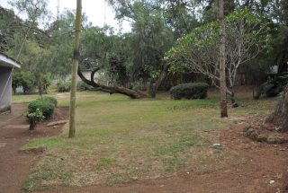 A Garden in the Three Bedroom Rental Home in Themi Hill, Arusha by Tanganyika Estate Agents