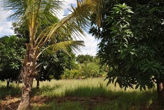 Part of the Land for Sale on Pugu Road, Dar es Salaam, by Tanganyika Estate Agents