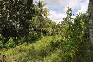 Some of the of the Land for Sale on Pugu Road, Dar es Salaam, by Tanganyika Estate Agents