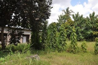 Trees on the Land for Sale on Pugu Road, Dar es Salaam, by Tanganyika Estate Agents