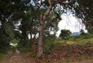 A Path on the Land for Sale on Pugu Road, Dar es Salaam, by Tanganyika Estate Agents