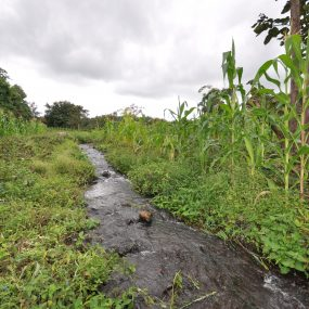 The stream near the Plot for Sale in Usa River, Arusha close to Momella Road by Tanganyika Estate Agents