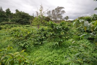 The Plot for Sale in Usa River, Arusha close to Momella Road by Tanganyika Estate Agents