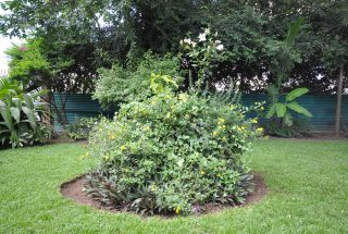 Plants Four Bedroom Furnished House in Olorien by Tanganyika Estate Agents