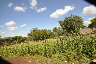 Some of the Views of the Plot of Land for Sale in Njiro, Arusha by Tanganyika Estate Agents