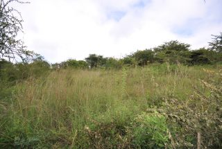 The Land Surrounding the 1 Bedroom Cottage for Sale in Mateves, Arusha by Tanganyika Estate Agents