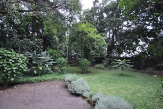 Garden with Lawn of the Four Bedroom House for Rent in Usa River, Arusha by Tanganyika Estate Agents