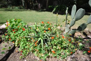 The Flower Garden of the 2 Bedroom Cottage for Sale Usa River, Arusha by Tanganyika Estate Agents