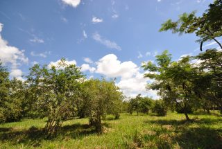 Some of the Land of the 2 Bedroom Cottage for Sale Usa River, Arusha by Tanganyika Estate Agents