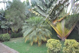 Part of the Garden of Three Bedroom Furnished Houses in Arusha by Tanganyika Estate Agents