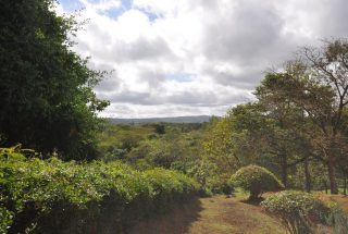 View of The Park 5 Bedroom Property for Sale Near Arusha National Park by Tanganyika Estate Agents