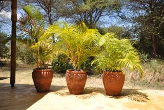 Potted Plants on the Four Bedroom House for Sale in Kili Golf, Arusha by Tanganyika Estate Agents