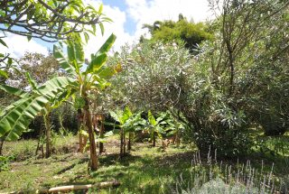 The Garden at the Back of the House for Rent by Tanganyika Estate Agents