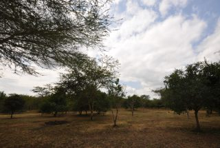 Part of the Land of the Two Bedroom House for Sale in Usa River, Arusha by Tanganyika Estate Agents