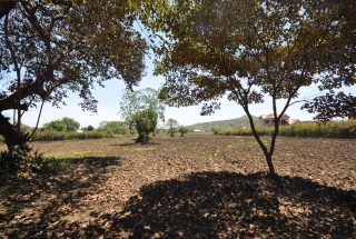 The Seven Acres or Sale in Moshono, Arusha by Tanganyika Estate