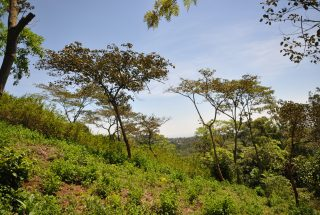 The Four Acres for Sale Close to Onsea, Arusha by Tanganyika Estate Agents