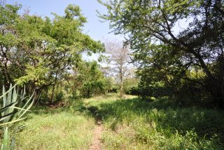 Trees of the 5 Bedroom Cottage for Sale in Usa River, Arusha by Tanganyika Estate Agents