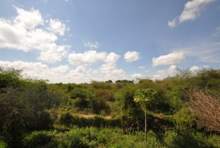 The Lush & Green Surroundings of the Commercial Property for Rent in Usa River, Arusha by Tanganyika Estate Agents
