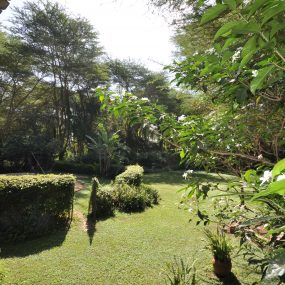 Lawn of the 6 Bedroom House for Sale in Olasiti, Arusha by Tanganyika Estate Agents