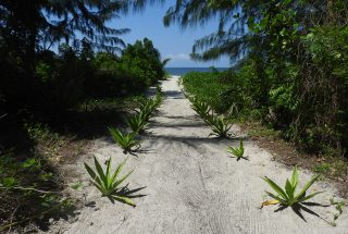 Roadway of the 6 Bedroom Cottage for Sale on Ushongo Beach by Tanganyika Estate Agents