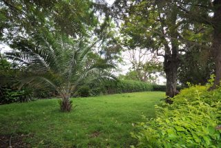 Lush Garden of the Three Bedroom Furnished Home by Tanganyika Estate Agents