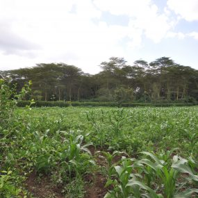 The Farm of the Three Bedroom Furnished Home by Tanganyika Estate Agents
