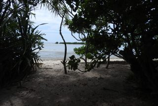 The Trees & Ocean on the Beachfront Property for Sale in Mwarongo by Tanganyika Estate Agents
