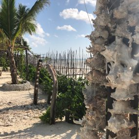 Some of the trees on Two Villa Hotel for Sale in Jambiani, Zanzibar by Tanganyika Estate Agents