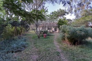 Some of the Mature Trees on the 3 Bedroom Cottage for Sale in Arusha by Tanganyika Estate Agents