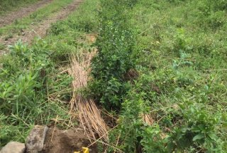 Ten Acres for Sale in Dolly Estate Arusha